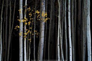 Matt Payne image of trees